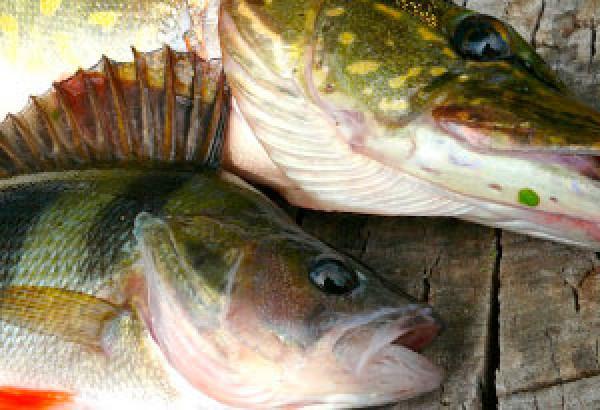 kalastusluvat-kuva